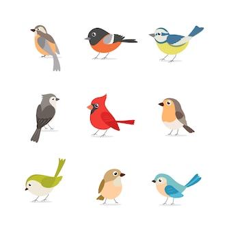 Zestaw kolorowych ptaków na białym tle
