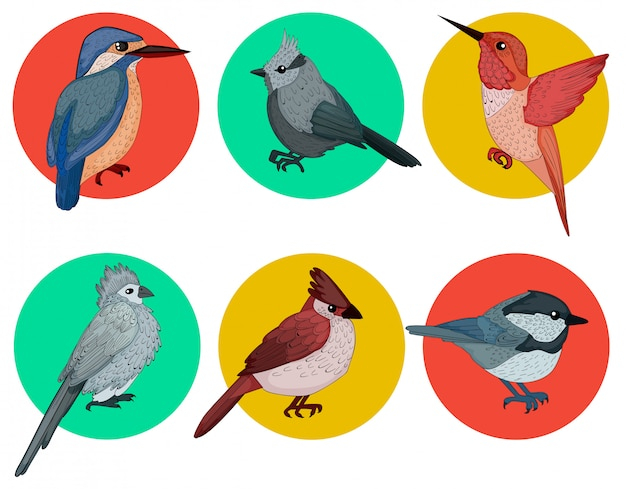 Zestaw kolorowych ptaków