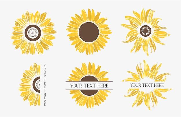 Zestaw kolorowych słoneczników. kwiat.