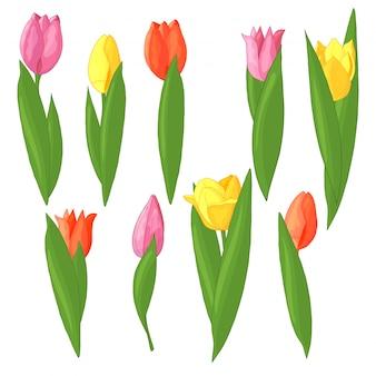Zestaw kolorowych tulipanów