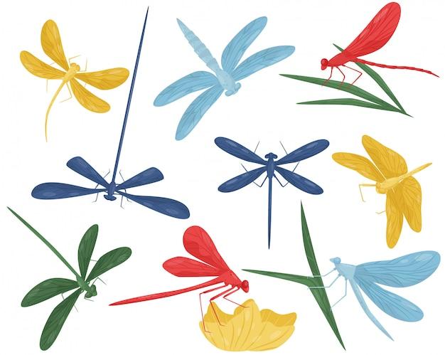Zestaw kolorowych ważek. małe, szybko latające stworzenia o długim ciele i dwóch parach skrzydeł. drapieżny owad