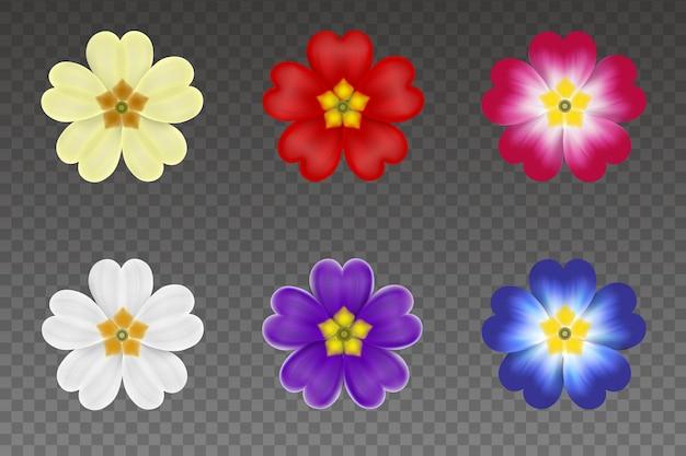 Zestaw kolorowych wiosennych kwiatów na białym tle pierwiosnków