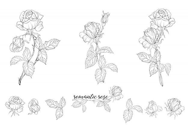 Zestaw kompozycji kwiatowych z kwiatami róży.
