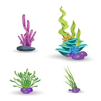 Zestaw koralowców i glonów