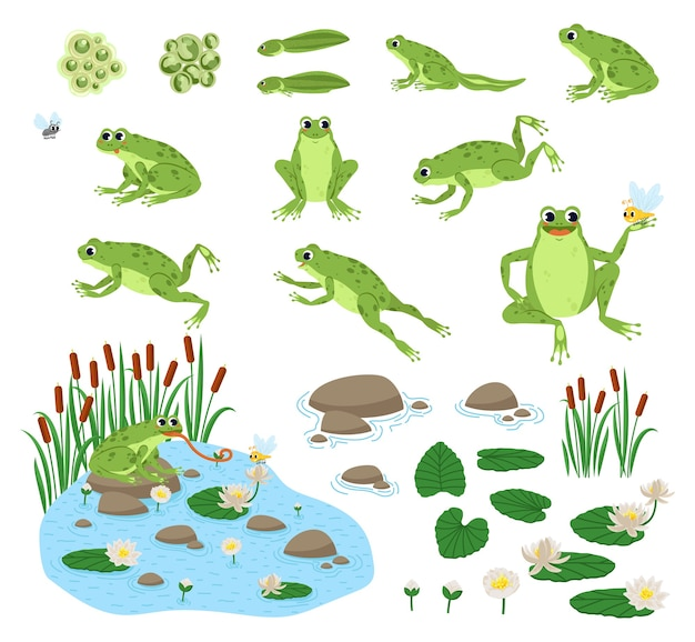 Zestaw kreskówka głodna żaba smutny, uśmiech, odpoczynek i polowanie.
