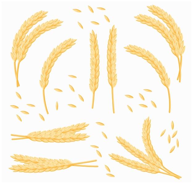 Zestaw kreskówka kilka pszenicy, owsa lub jęczmienia na białym tle. wektor zestaw kłosy pszenicy.