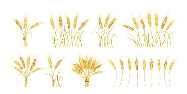 Zestaw kreskówka kłosy pszenicy snop złota, zbiór dojrzałych zbóż kiści, symbol rolniczy produkcja mąki