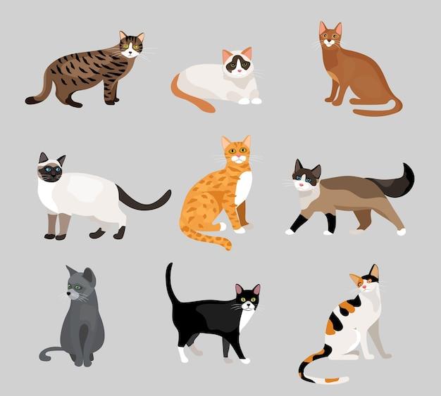 Zestaw kreskówka kotki lub koty z różnymi kolorami futra i oznaczeniami stojącymi, siedzącymi lub chodzącymi ilustracje wektorowe na szaro