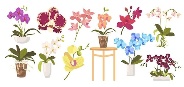 Zestaw kreskówka kwitnące storczyki, doniczki, liście i łodygi. kwiaty domowe na białym tle. tropikalna piękna flora, różne elementy projektu storczyki. ilustracja wektorowa