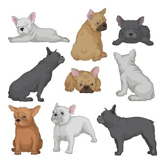 Zestaw kreskówka szczeniąt boston terrier w różnych pozach. mały pies domowy z pomarszczonym pyskiem i gładką sierścią. zwierzęta domowe