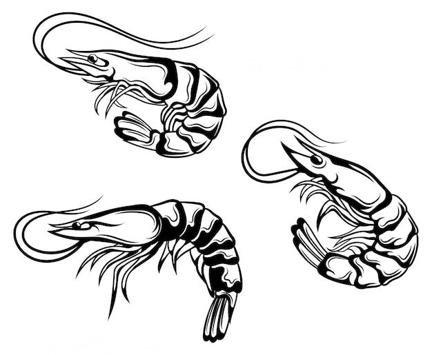 Zestaw krewetek. kolekcja krewetek królewskich w skorupkach. mieszkańcy obszarów morskich
