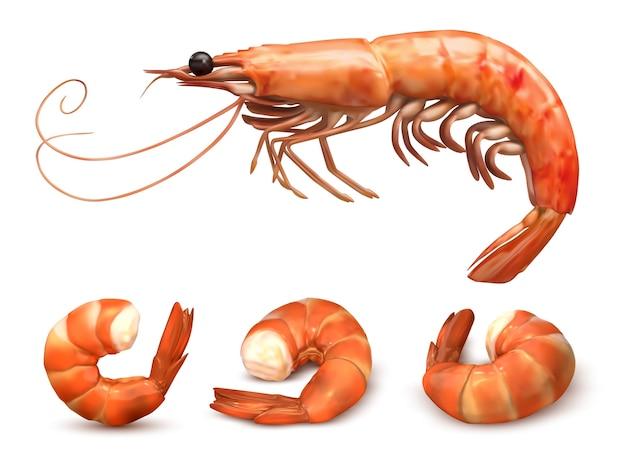 Zestaw krewetek lub krewetek. pyszne gotowane owoce morza. łuskany ogon krewetki. realistyczna ilustracja na białym tle