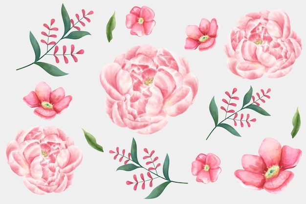 Zestaw kwiatów akwarela