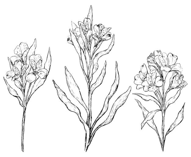 Zestaw kwiatów alstremerii. kolekcja roślin tropikalnych. zarys ręcznie rysowane ilustracji wektorowych. vintage szkice botaniczne na białym tle.