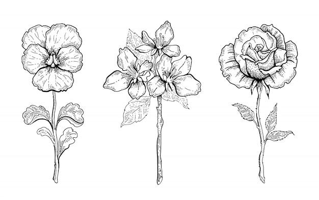 Zestaw kwiatów bratek, kwiat wiśni, róża. kwiecista grafika, szkic ilustracji roślin. czarno-biała sztuka linii vintage. ręcznie rysowane wiosenne lub letnie kwiaty.