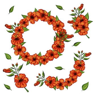 Zestaw kwiatów hibiskusa i wieniec z liści. pojedynczo na białym tle.
