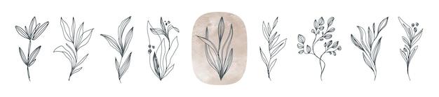 Zestaw kwiatów i roślin linii sztuki ręcznie rysowane elementy kwiatowe w stylu botanicznym i boho