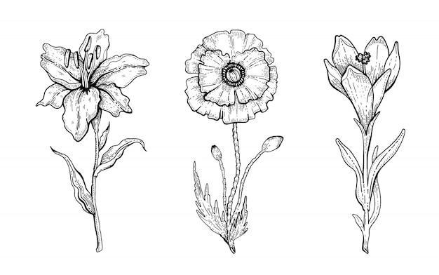 Zestaw kwiatów lily, mak, krokus. kwiecista grafika, szkic ilustracji roślin. czarno-biała sztuka linii vintage. ręcznie rysowane wiosenne lub letnie kwiaty.