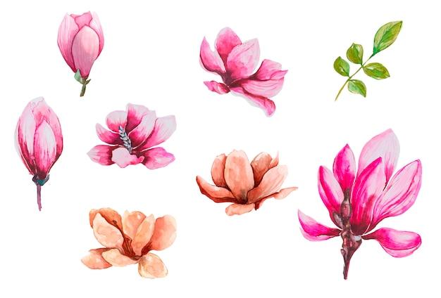 Zestaw kwiatów magnolii akwarela