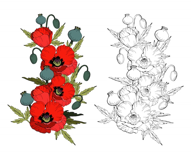 Zestaw kwiatów maku czerwone maki i czarno-biała kopia