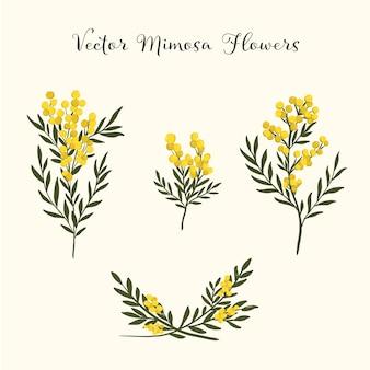 Zestaw kwiatów mimozy
