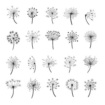Zestaw kwiatów mniszka lekarskiego