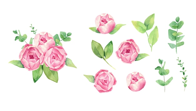 Zestaw kwiatów piwonii akwarela róży