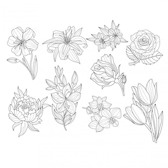 Zestaw kwiatów ręcznie rysowane ilustracji