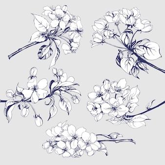 Zestaw kwiatów szkic kwitnących gałęzi drzewa jabłoni do projektowania ilustracji wektorowych