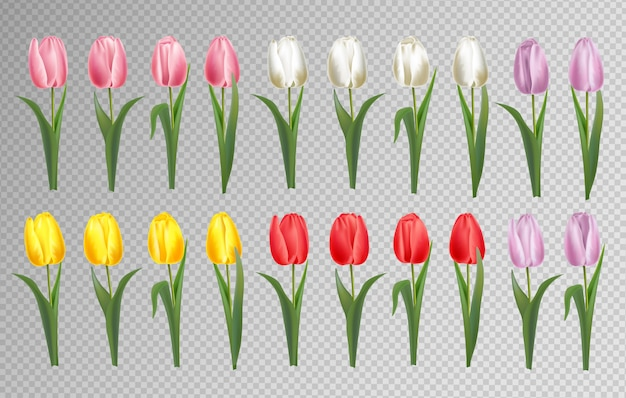 Zestaw kwiatów tulipanów