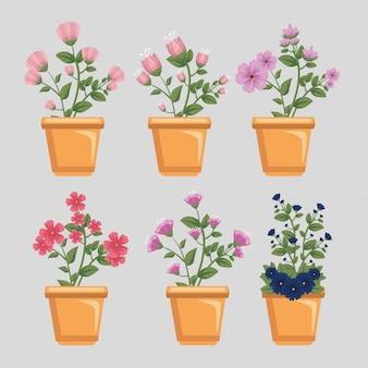 Zestaw kwiatów z liśćmi i płatkami w doniczkach
