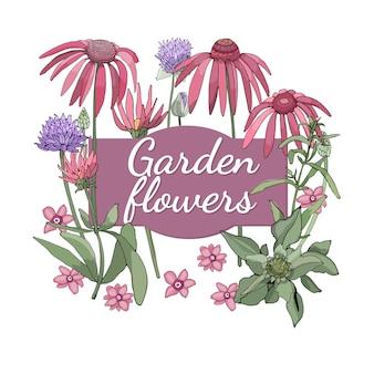 Zestaw kwiatowy. latem i wiosną izolowane kwiaty i zioła ogrodowe ze szczypiorkiem, jeżówką (echinacea), jedwabistym piołunem (estragon).