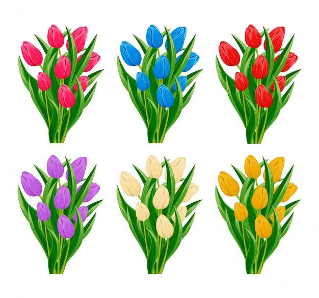 Zestaw kwitnący kwiat tulipan wiosna