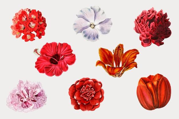 Zestaw kwitnących kolorowych kwiatów