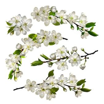 Zestaw kwitnących wiśni białych kwiatów i liści na białym tle na wiosnę kartkę z życzeniami, baner, tapetę lub plakat. ilustracja wektorowa