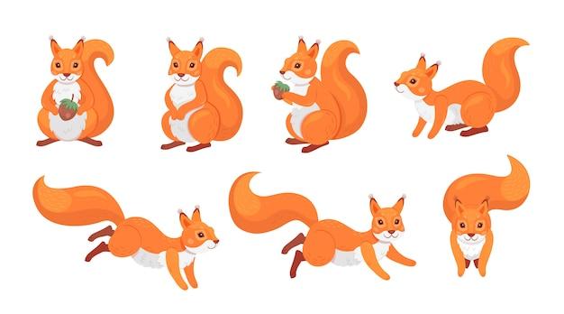 Zestaw ładny czerwona wiewiórka
