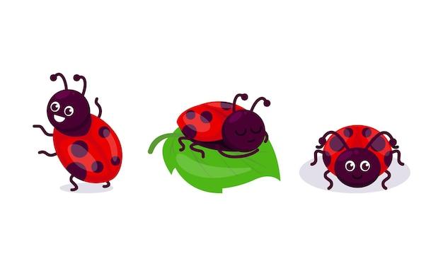 Zestaw ładny ilustracja projekt maskotki owadów biedronka