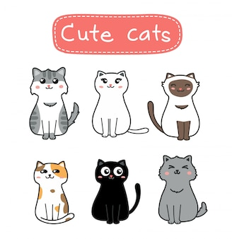 Zestaw ładny kot