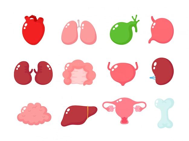 Zestaw ładny ludzkich zdrowych narządów.