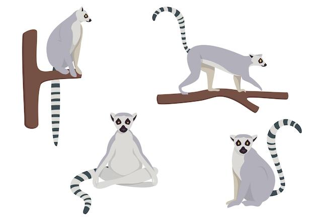 Zestaw lemurów w różnych pozach. ilustracje w stylu kreskówka na białym tle.