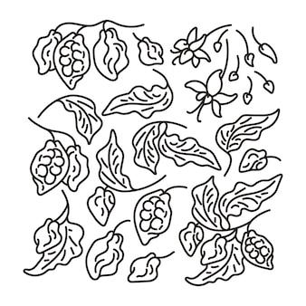 Zestaw linii sztuki kakaowej streszczenie drzewo liść owoc fasoli kwiat ręcznie rysowane prosty szkic