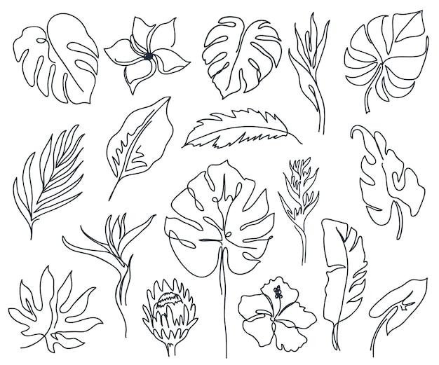 Zestaw liniowych różnych kwiatów, liści monstery i innych liści czarno-biała sztuka minimalny zarys sylwetki
