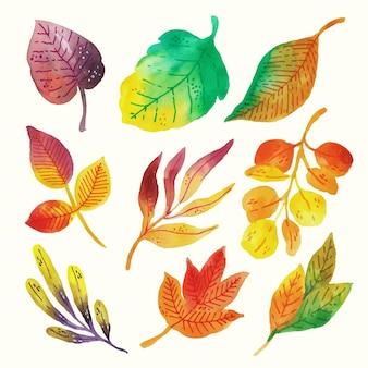 Zestaw liści akwarelowych ręcznie malowanych