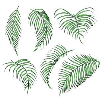 Zestaw liści dżungli na białym tle.