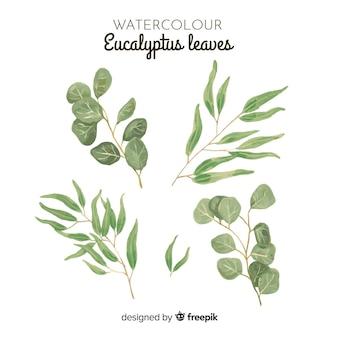 Zestaw liści eukaliptusa akwarela