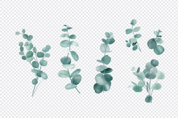 Zestaw liści eukaliptusa na przezroczystym tle
