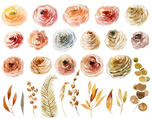 Zestaw liści i gałęzi akwarelowych róż ręcznie malowanych na białym tle ilustracje
