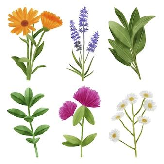 Zestaw liści i kwiatów
