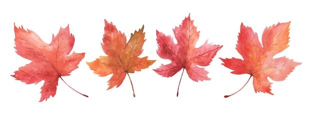 Zestaw liści klonu akwarela ręcznie malowane na białym tle. ilustracja idealna do projektowania dekoracyjnego na jesiennym festiwalu, kartki okolicznościowe, zaproszenia, plakaty.