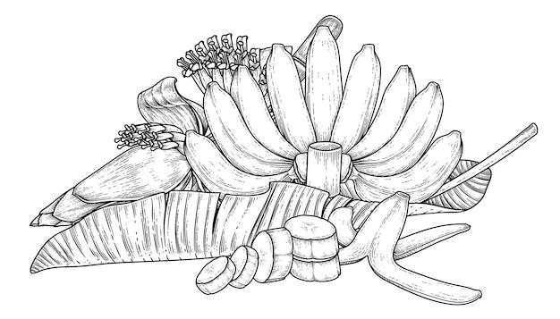 Zestaw liści owoców bananowca i ręcznie rysowane szkic kwiat banana